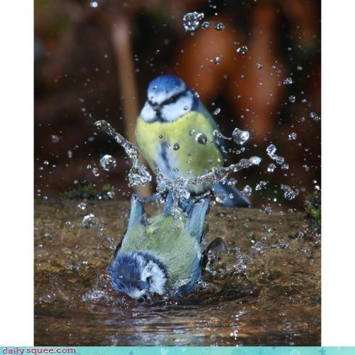accident acting like animals bath feud fighting promise splash threat warning - 4217544704