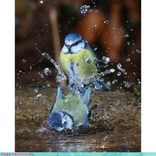 accident acting like animals bath beating bird bath dispute feud fighting promise splash territory threat warning - 4217544704