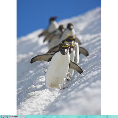 acting like animals,competition,luge,luging,olympics,penguin,penguins,skiing,synchronized,training