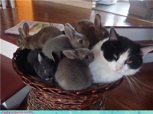 baby bunny cat rabbit rabbot user pets - 4217656832