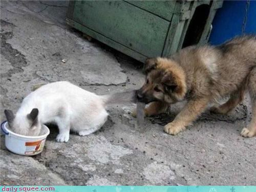 cat,cute,dogs,kitten,Om Nom Monday,puppy