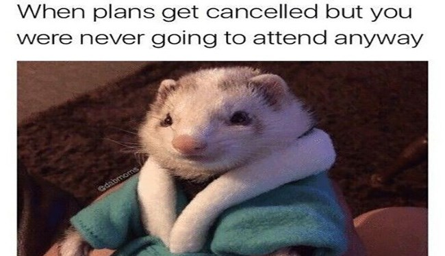 a funny list of ferret memes