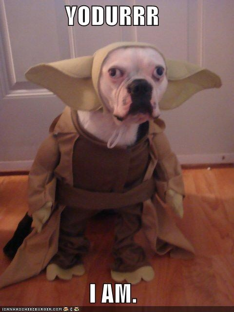 best of week,critters,dogs,take it off,yoda,you must