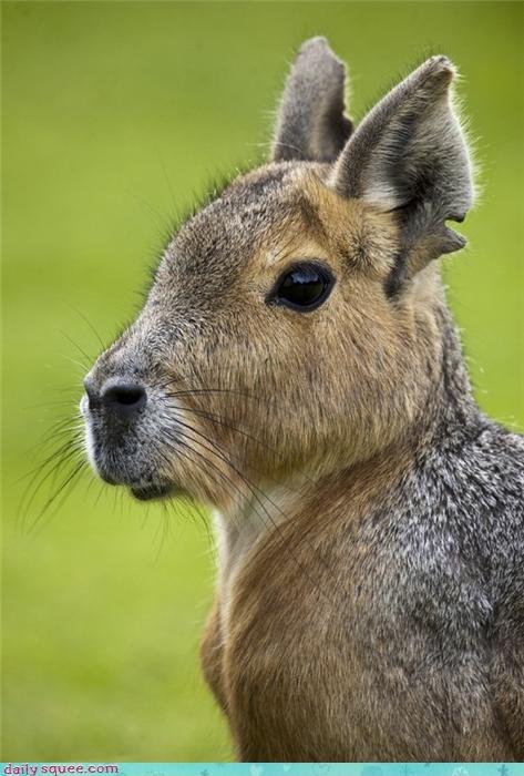 animal baby cute whatsit wednesday - 4219172096