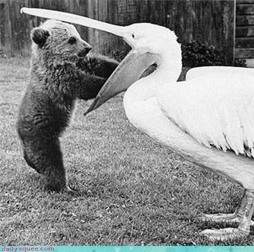 bear,bird,cute,noms,vintage
