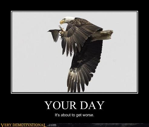 bald eagle bird nature predators raptors your day - 4219230464