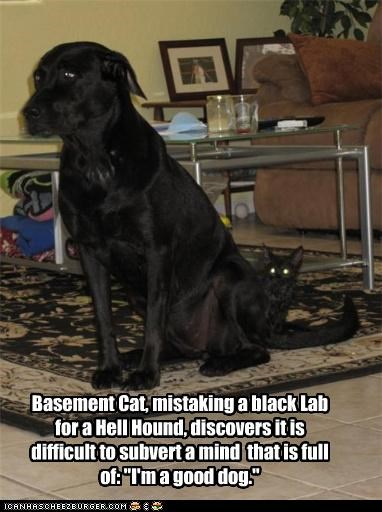basement cat basement dog black FAIL good dog labrador mistake subversion - 4219426304