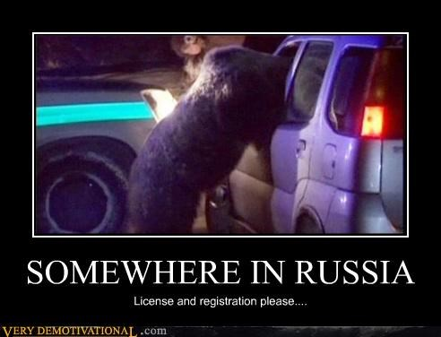 animals bear cops bears cops makes sense to me russia - 4219586560