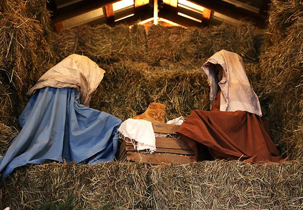 a funny list of cats being baby jesus in the scene everyone knows about