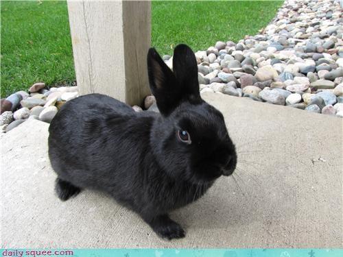 bunny happy bunday pet rabbit reader squee - 4219910656