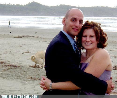 beach couple dogs dump formal lol photobomb poop - 4220073728