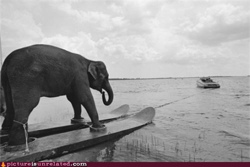 boat elephant vintage water water skis wtf - 4220229376