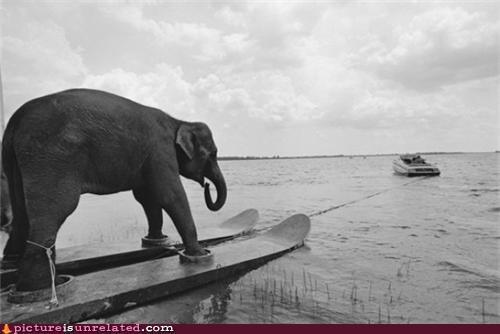 boat elephant vintage water water skis wtf - 4220229376
