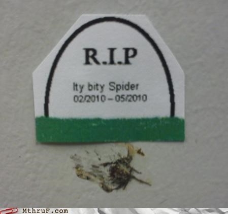 bugs grave spider - 4220380672
