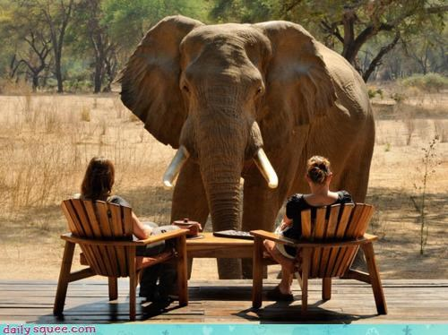 acting like animals compliments dating elephant flirting huge humans imposing inviting ladies lunch noms pickup line tea Terrifying women