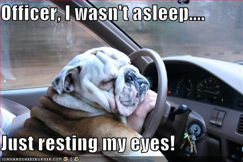 bulldog,car,cops,driving,excuse,explanation,Hall of Fame,officer,police,pulled over,resting,sleeping,steering wheel