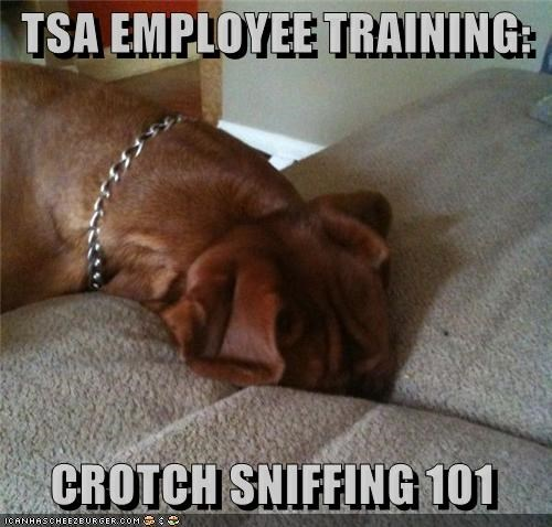 101 class couch crotch employee Hall of Fame lesson sniffing training TSA whatbreed - 4221719552
