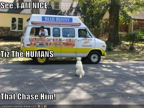 chasing,humans,ice cream,ice cream truck,labrador,logic,see,truck