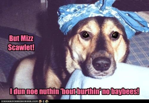 Babies bandana birthing bonnet but dont-know famous german shepherd just saying miss nothing objection quote scarlet - 4222480640