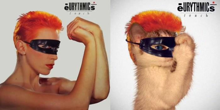 staging cats in famous album covers