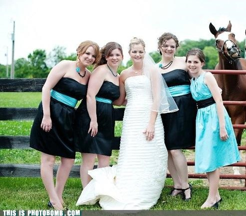 animals,dress up,formal,horse,mean,photobomb,wedding