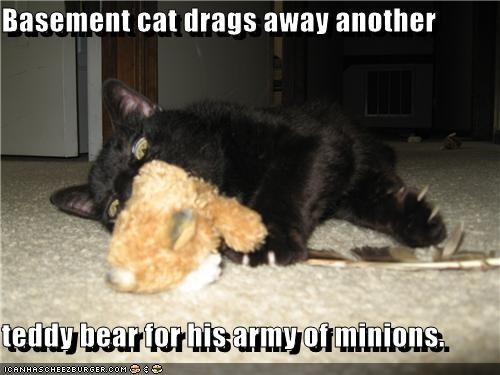 Basement cat drags away another  teddy bear for his army of minions.