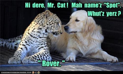 "Hi dere, Mr. Cat ! Mah name'z ""Spot"". "" Rover. "" Whut'z yerz ?"