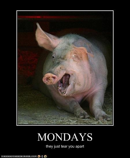 critters,farm,mondays,pig,will tear you apart again