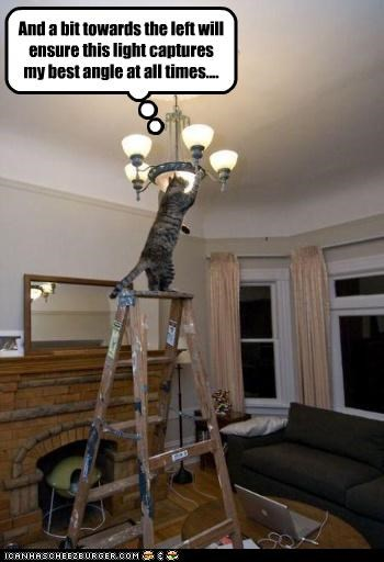 adjustment,adjustments,angle,caption,captioned,cat,good side,ladder,light,photographer
