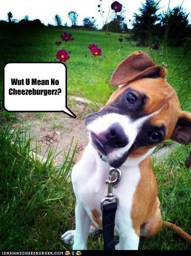 Cheezburger Image 4224038656