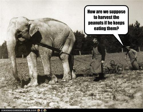 animal elephant funny Photo - 4224280576