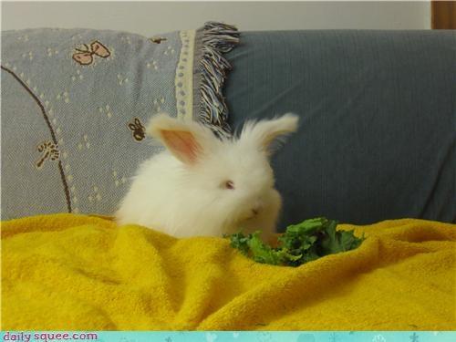 albino angora bunny Fluffy happy bunday pet rabbit reader squee - 4224922112