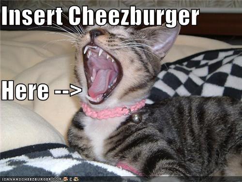 Cheezburger Image 4225285888