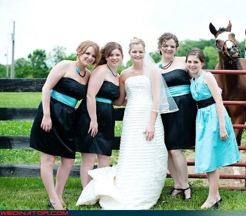 bride,bridesmaid photobomb,fashion is my passion,funny photobomb picture,funny wedding photos,horse photobomb,horse photobomb wedding picture,miscellaneous-oops,surprise,technical difficulties,wedding party