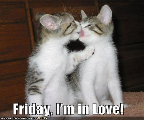 caption captioned french kiss friday-im-in-love kitten lick two cats - 4226091008