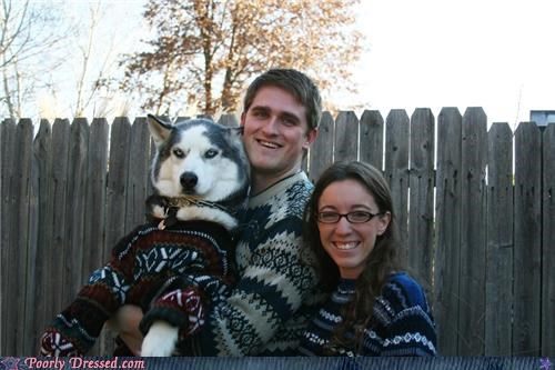 animals,dogs,family photo,sweaters,winter weird,wtf
