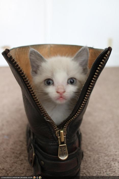 boot,cyoot kitteh of teh day,kitten,puss n boots,shoes