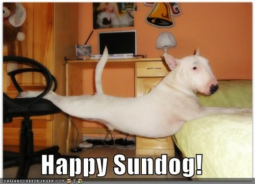 balancing bed bull terrier chair happy sundog lounging stretching Sundog - 4227595776