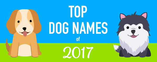 dogs popular names 2017 - 4227845