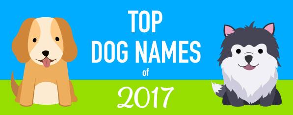 popular names 2017 - 4227845