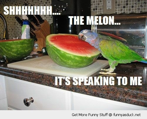 a funny list of parrot memes