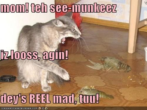 afraid,angry,caption,captioned,cat,freaked out,lobsters,mad,mom,sea monkeys,yelling