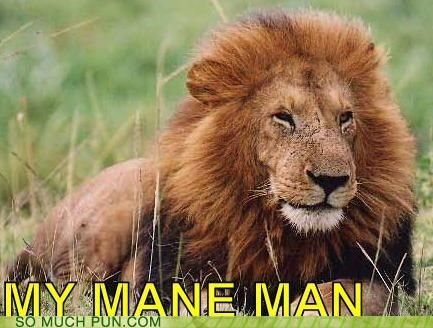 bro,figures of speech,homophone,lion,main man,man,mane,meow