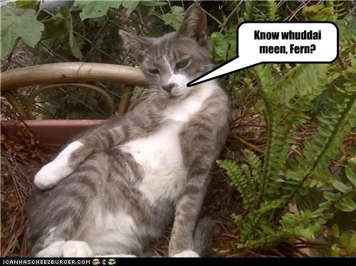 Know whuddai meen, Fern?
