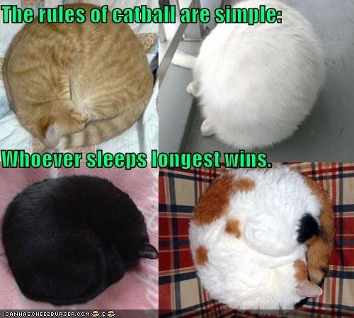 caption captioned cat catball Cats competition game rules simple sleeping winner