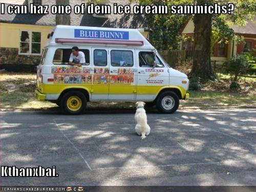 Cheezburger Image 4229180160
