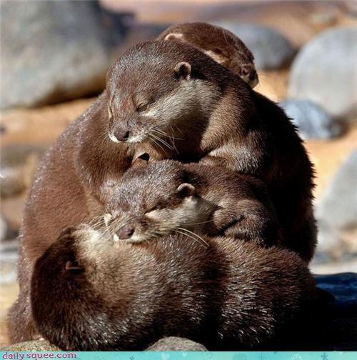 Otter Stack