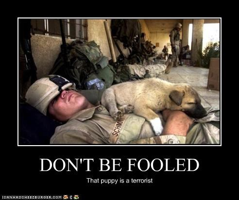 DON'T BE FOOLED That puppy is a terrorist