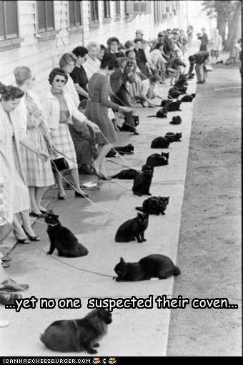animals Cats funny Photo - 4231872512