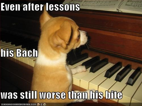 Bach bark bite chihuahua Hall of Fame lessons piano pun